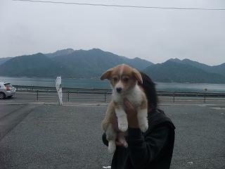 2008_0413Laniちゃんの日々0025.jpg