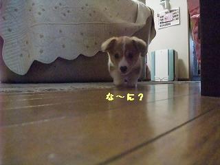 2008_0416Laniちゃんの日々0007.jpg