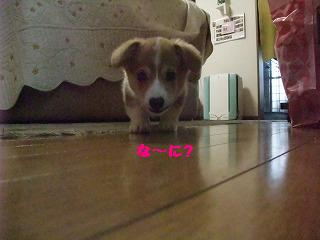 2008_0416Laniちゃんの日々0004.jpg