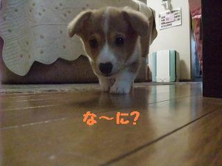 2008_0416Laniちゃんの日々0008.jpg