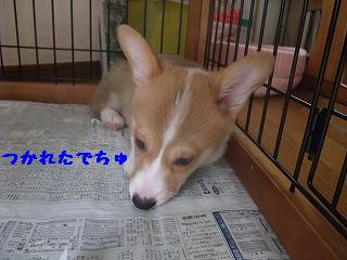 2008_0422Laniちゃんの日々0016.jpg