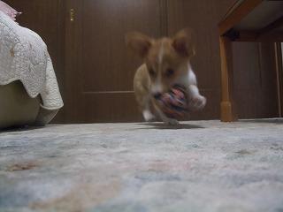 2008_0509Laniちゃんの日々0059.jpg