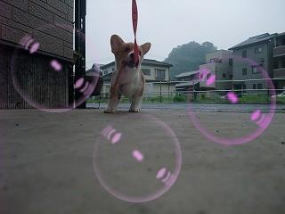 2008_0524Laniちゃんの日々0026.jpg