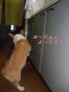 2008_0804キッチンに立つLan0010.jpg