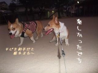 2008_0806まろんちゃんと公園で0003.jpg