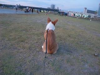 2008_0810朝の散歩、港公園にて0009.jpg