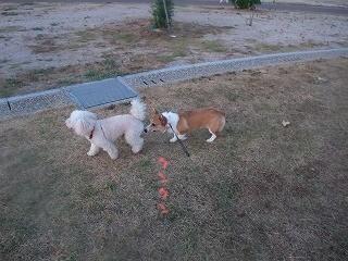 2008_0810朝の散歩、港公園にて0008.jpg