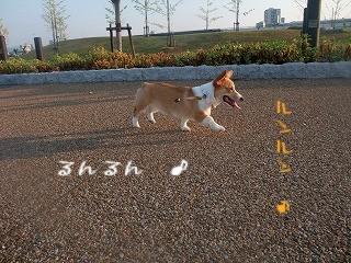 2008_0810朝の散歩、港公園にて0037.jpg