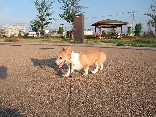2008_0810朝の散歩、港公園にて0052.jpg