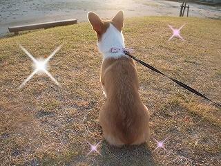 2008_0810朝の散歩、港公園にて0042.jpg