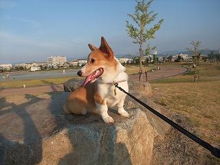 2008_0810朝の散歩、港公園にて0047.jpg