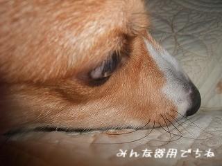 2008_0829雨の朝他0039.jpg