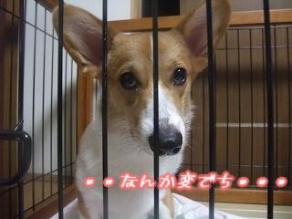 2008_1002今朝の様子0009.jpg
