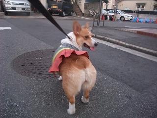2008_1021初の洋服で散歩0009.jpg