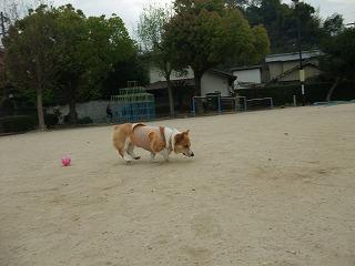 2010_0419今朝の散歩0004.jpg