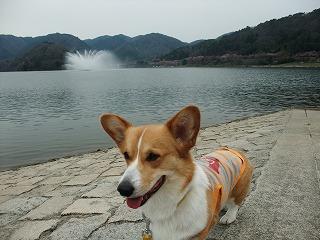 2010_0418土師ダム0006.jpg
