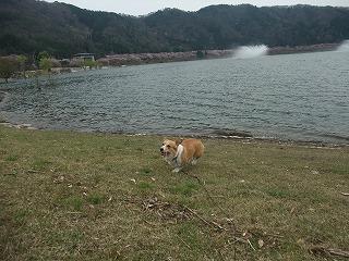 2010_0418土師ダム0007.jpg