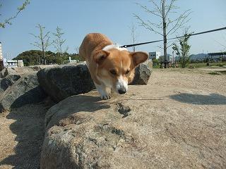 2010_0501みなと公園で0010.jpg