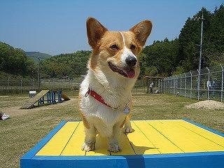 2004_01012010_0503岡山にて0070.jpg