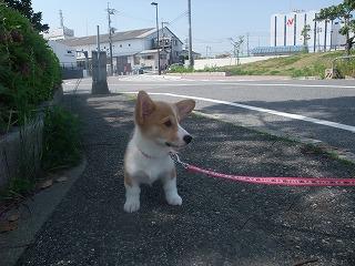 2008_0506Laniちゃんの日々0048.jpg