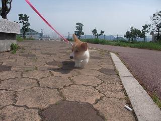 2008_0506Laniちゃんの日々0070.jpg