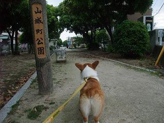 2010_0525山城公園にて0033.jpg