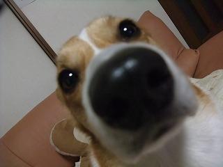 2011_01010004.jpg