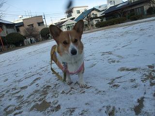 2011_0116雪の朝0001.jpg