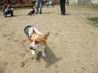 2011_0417岡山でのラン0010.jpg