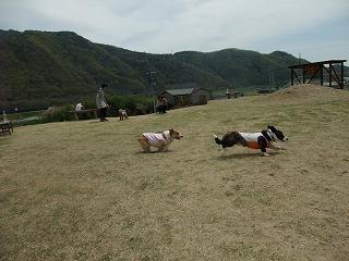 2011_0417岡山でのラン0009.jpg