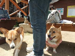2011_0417岡山でのラン0057.jpg