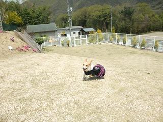2011_0417岡山でのラン0071.jpg