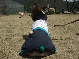 2011_0417岡山でのラン0060.jpg