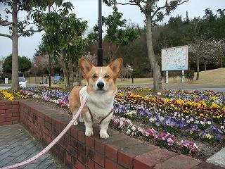2011_0417岡山でのラン0121.jpg