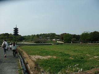 2011_0430御津のランと国分寺0064.jpg