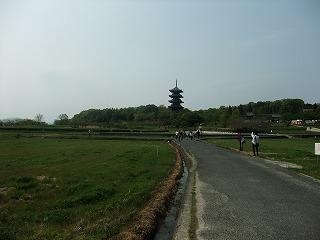2011_0430御津のランと国分寺0065.jpg