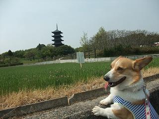 2011_0430御津のランと国分寺0042.jpg