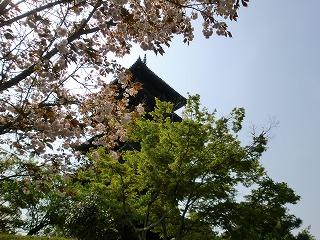 2011_0430御津のランと国分寺0212.jpg