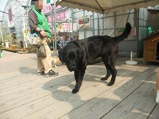2011_0430御津のランと国分寺0066.jpg
