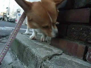2011_0513散歩0024.jpg