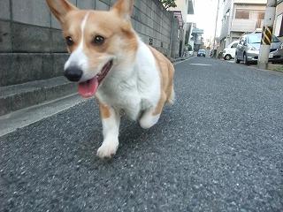 2011_0513散歩0029.jpg