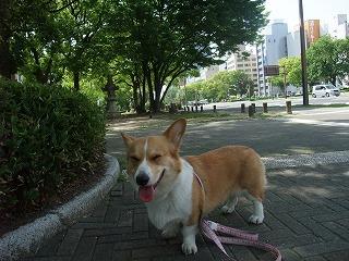 2011_0514平和大通りでの散歩0028.jpg