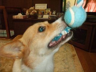 2011_0522おもちゃで0003.jpg