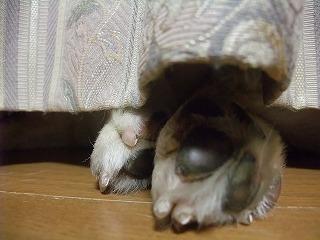 2011_0525カーテンの陰0006.jpg