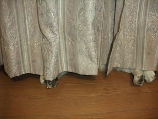 2011_0525カーテンの陰0013.jpg