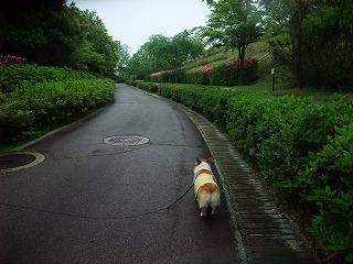 2011_0523森林公園にて0010.jpg
