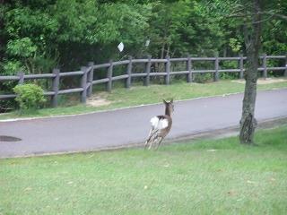 2011_0523森林公園にて0012.jpg