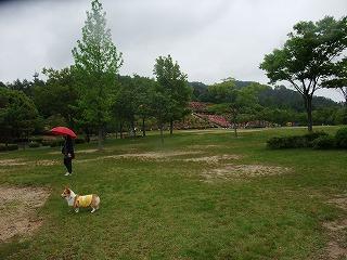 2011_0523森林公園にて0014.jpg