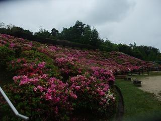 2011_0523森林公園にて0018.jpg