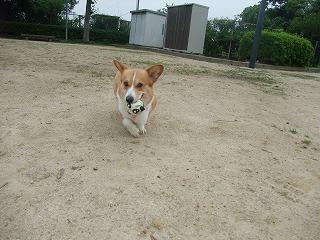 2011_0614散歩0010.jpg